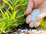 Рейтинг азотных удобрений
