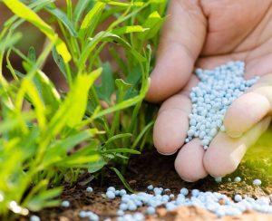 Какие удобрения надо вносить весной для сада и огорода