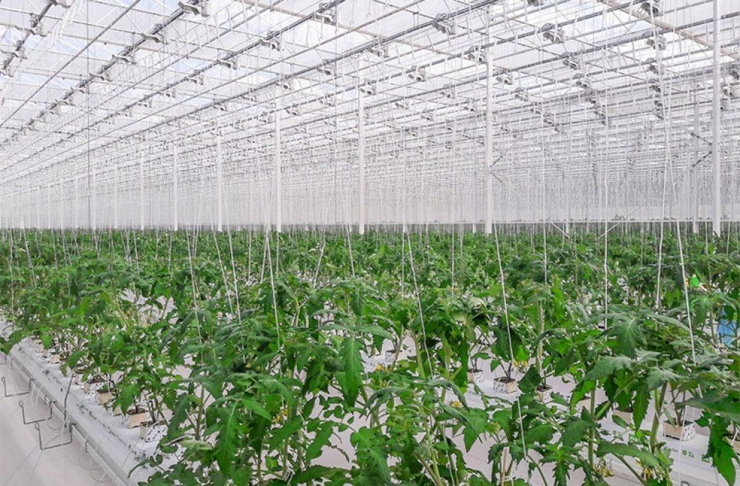 «Рязанские овощи» создают новый тепличный комплекс