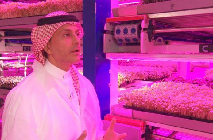 Дубай обзаводится городскими фермами
