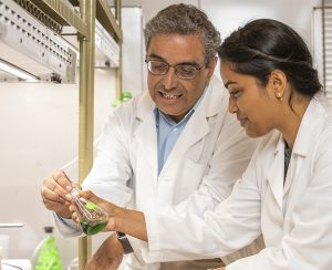 Ученые изучат цианобактерии