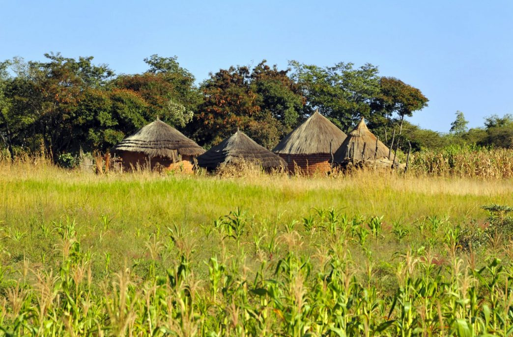 Fertilizer Grain and Seed попала в «похоронный» скандал