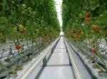 Тепличный бизнес в Башкортостане может столкнуться с проблемами