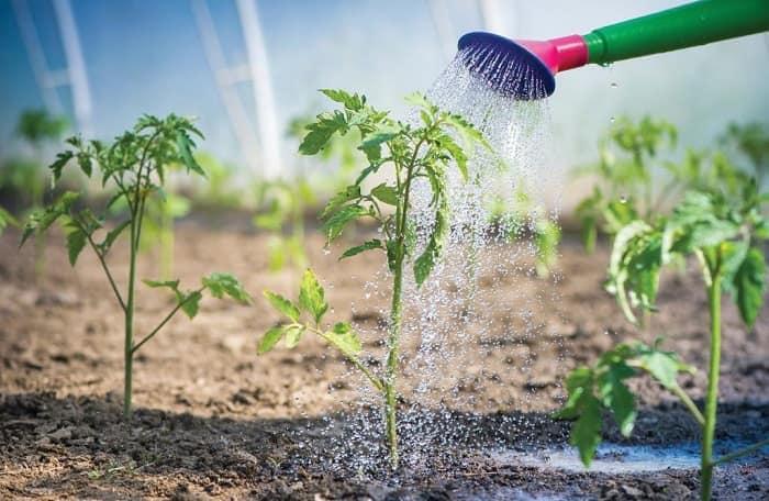 народные приметы посева семян и высадки рассады