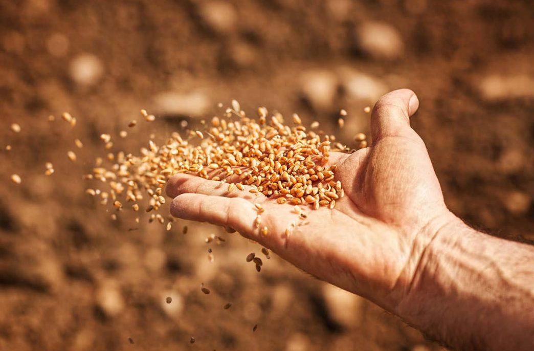 Искусственный интеллект поможет в выборе семян