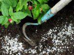 Особенности сезонного применения мочевины на огороде