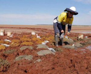 Trigg Mining приступает к бурению на Laverton Links