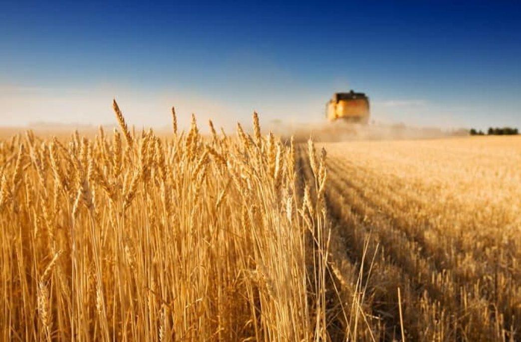 Сельское хозяйство в России: актуальные сводки, перспективы