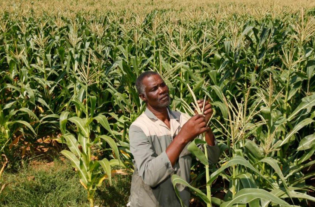 В Гане разработано новое удобрение