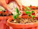 В Кировской области создадут перспективные агрохимикаты
