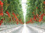Водорастворимые удобрения от «Алмаз Групп» помогут интенсификации сельхозпроизводства России