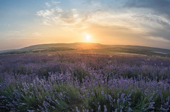 В Крыму хотят расширить сельскохозяйственные земли