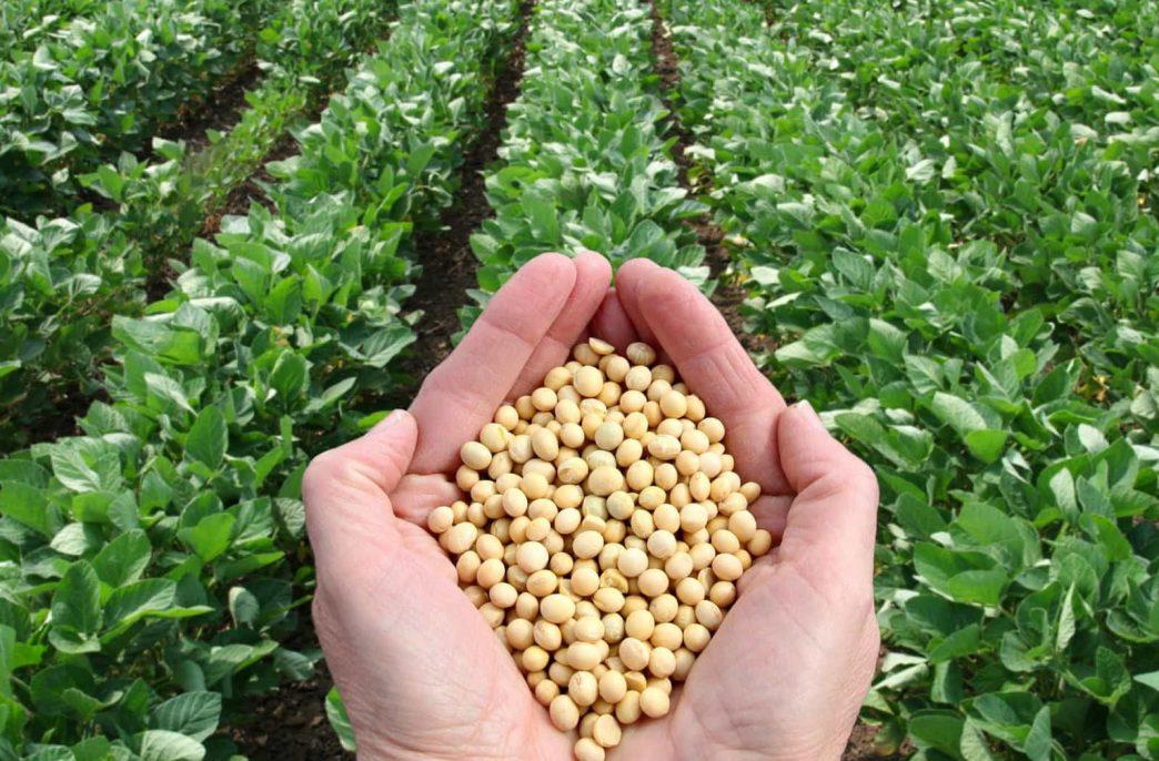 В России введут новые инструменты поддержки сельского хозяйства