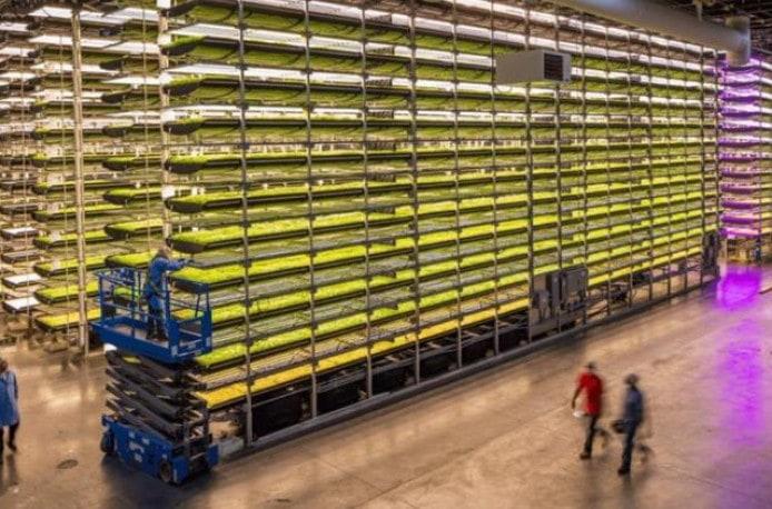 AeroFarms построит новую ферму