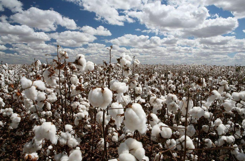 ITFC поддержит сельское хозяйство Узбекистана