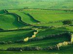 «Европейский зеленый курс» изменит сельское хозяйство Старого Света