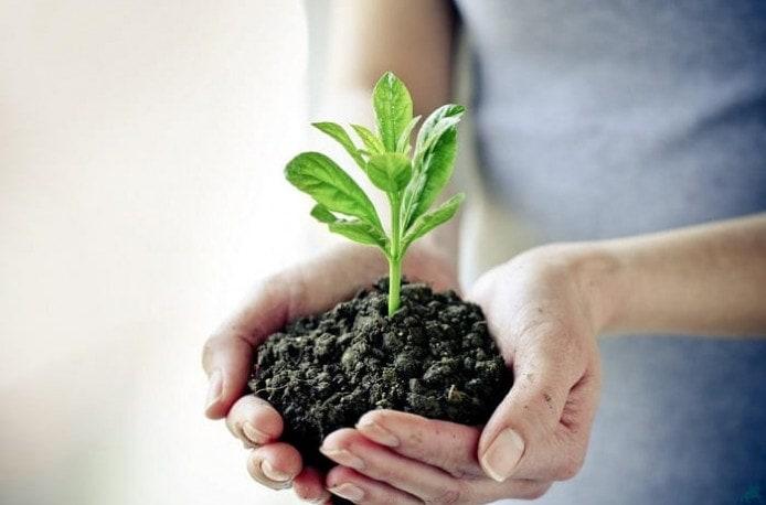 Какие бывают средства для защиты растений от вредителей и заболеваний