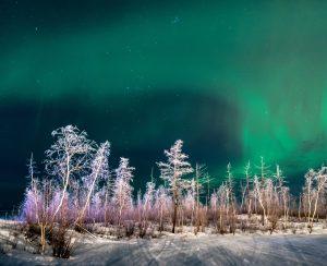 На севере Красноярского края прогнозируется земледельческий бум