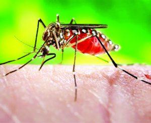Камбоджийский бэтмен против лихорадки денге
