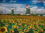 Одесский припортовый завод развивает экспорт