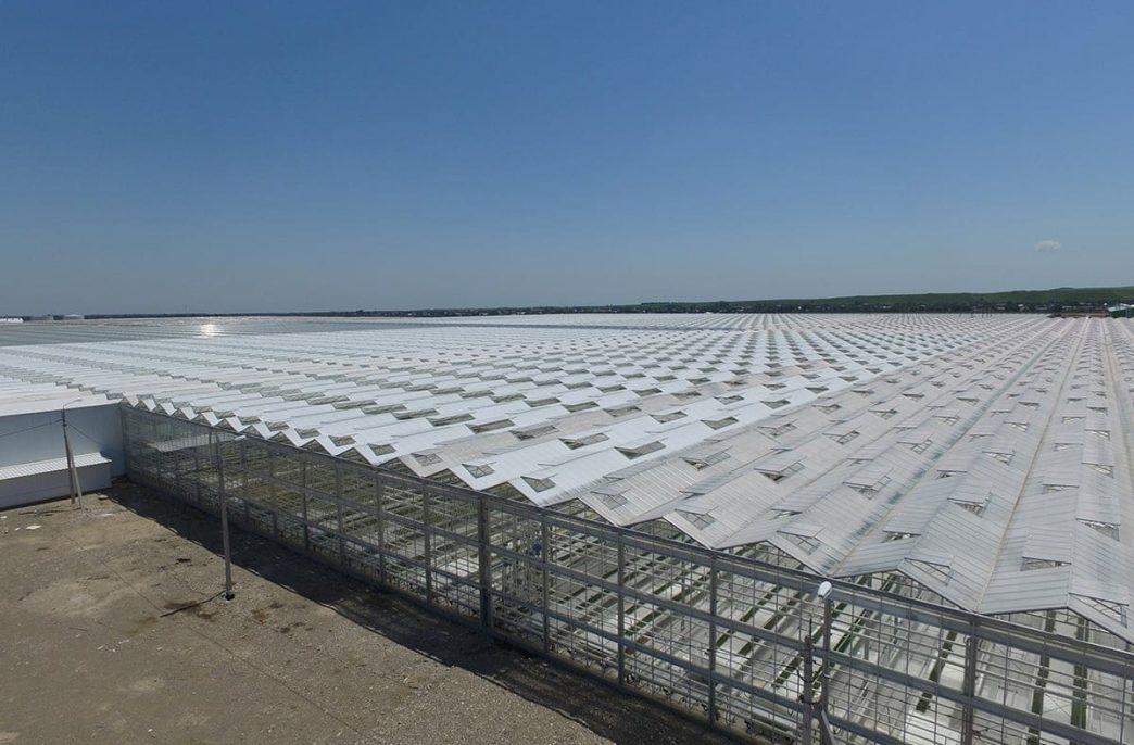 В Ставропольском крае прогнозируется рост тепличных площадей