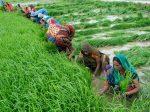 Продажи карбамида в Пакистане поставили рекорд