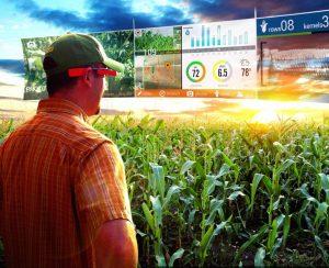 Digital Agro стала инвестором «ИнфоБиса»