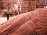 Indian Potash может продлить контракт с БКК