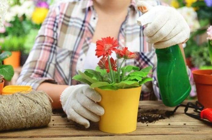 Какие удобрения нужны для цветов