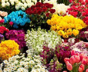 Рейтинг удобрений для срезанных цветов
