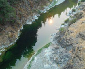 Сорняки спасут США от экологического кризиса