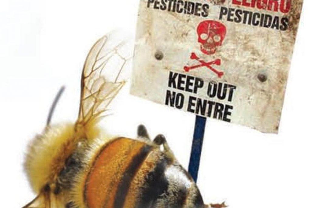 В Бразилии массово вымирают пчелы