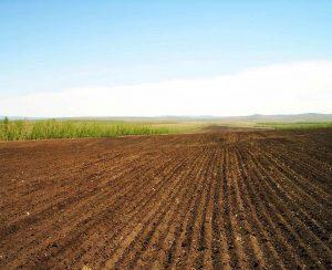 В Хабаровском крае вырастут посевные площади