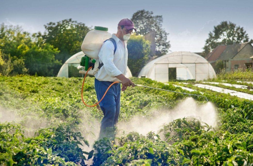 Россиянам порекомендовали позаботиться о защите растений