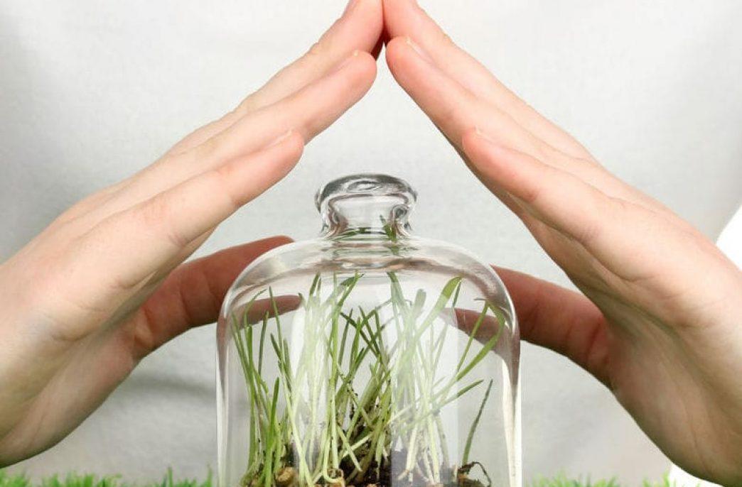 Средства защиты растений: виды и особенности