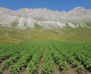 В Северной Осетии хотят внедрять экологическое земледелие