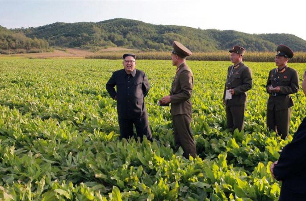 В Северной Корее заготовят меньше компоста
