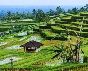 Шри-Ланка закупит удобрения