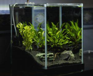 Рейтинг удобрений для аквариумных растений