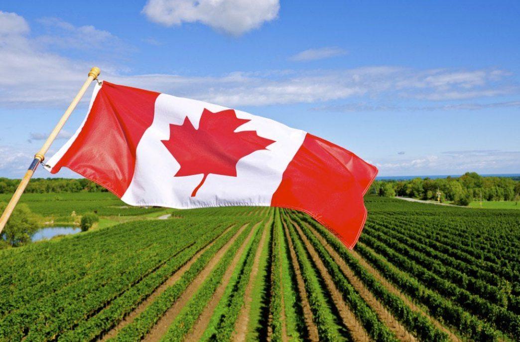 Fertilizer Canada просит обезопасить поставки