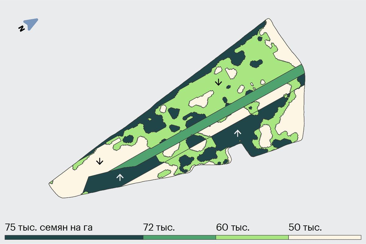 Карта-задание поля Виктория