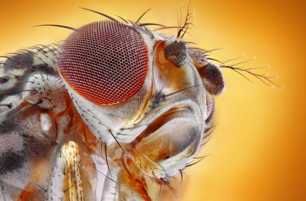 Дронов научили имитировать полет мухи