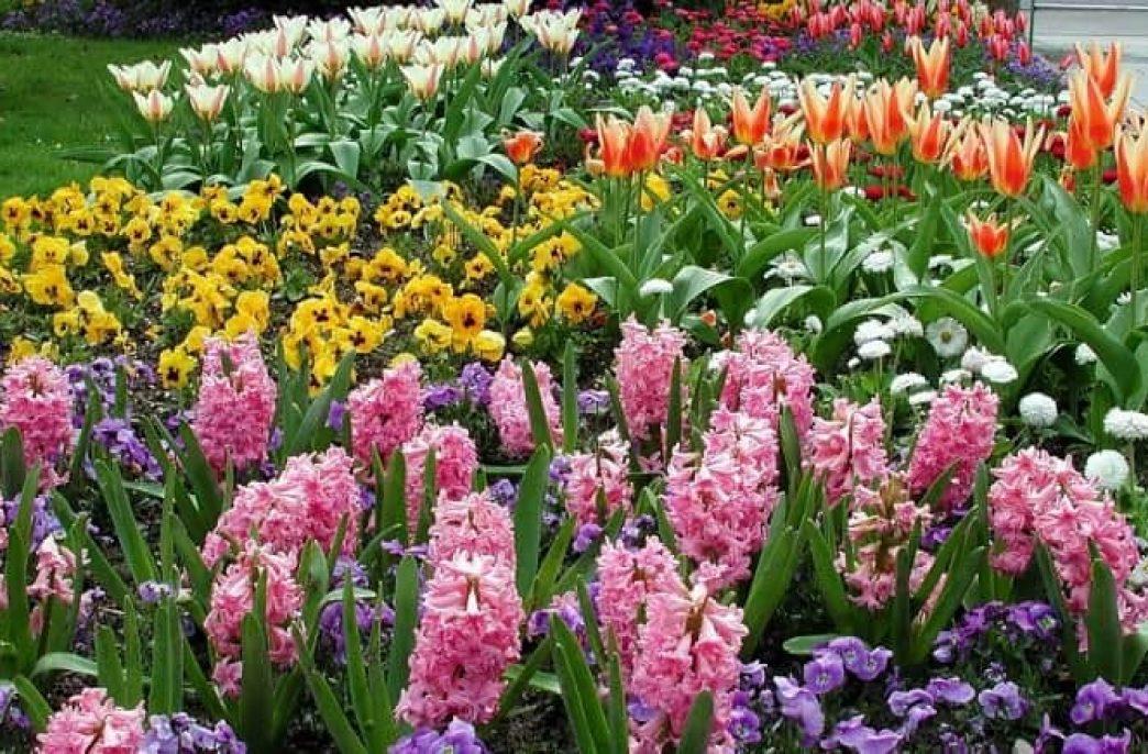 Лучшие удобрения для садовых цветов