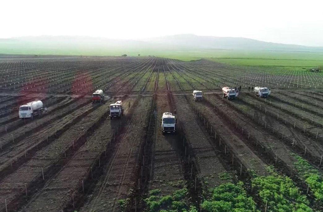 В Азербайджане полностью либерализовали рынок агрохимикатов