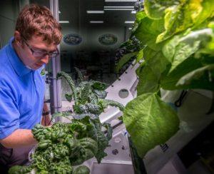 На МКС вырастили салат