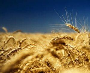 В Ульяновской области проведут оцифровку полей
