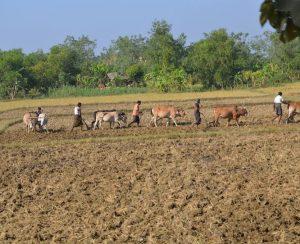 В Мьянме снизится производство агрохимикатов