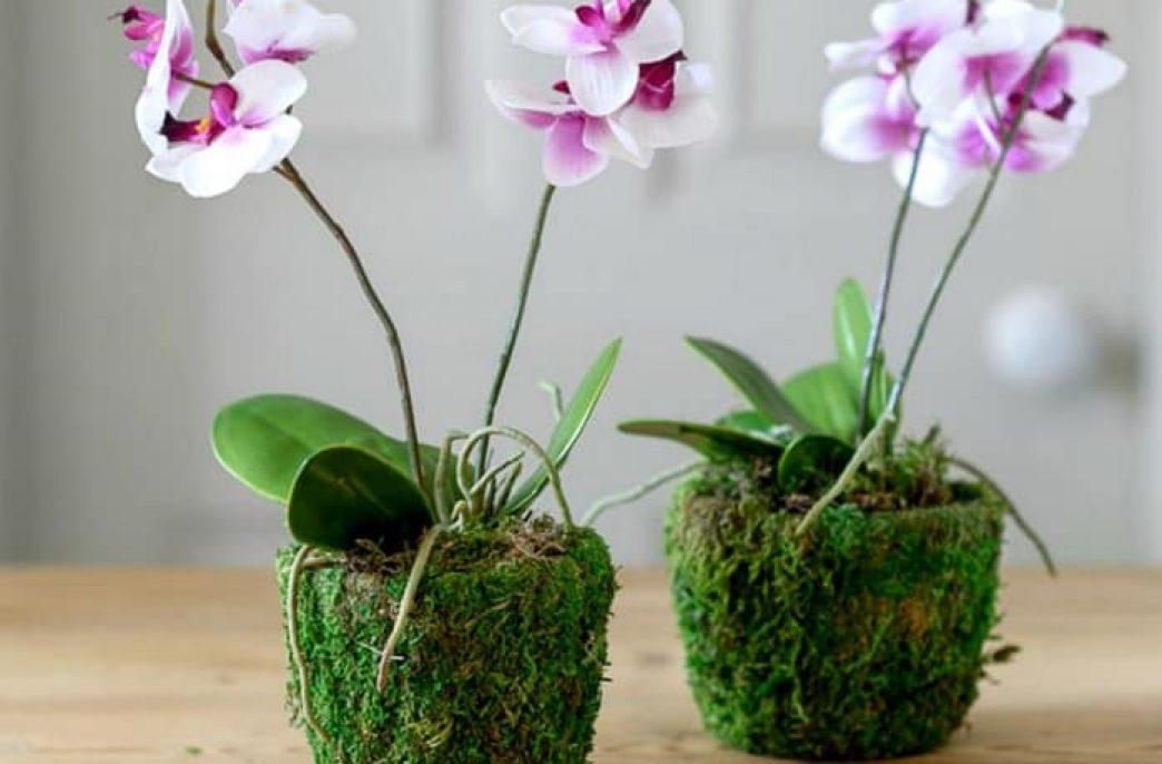 Основные потребности ухода для выращивания орхидей