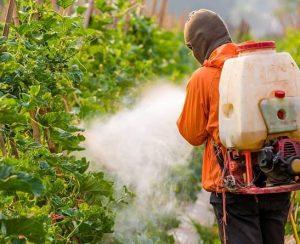Пестициды: изучаем, что это такое и чем они опасны