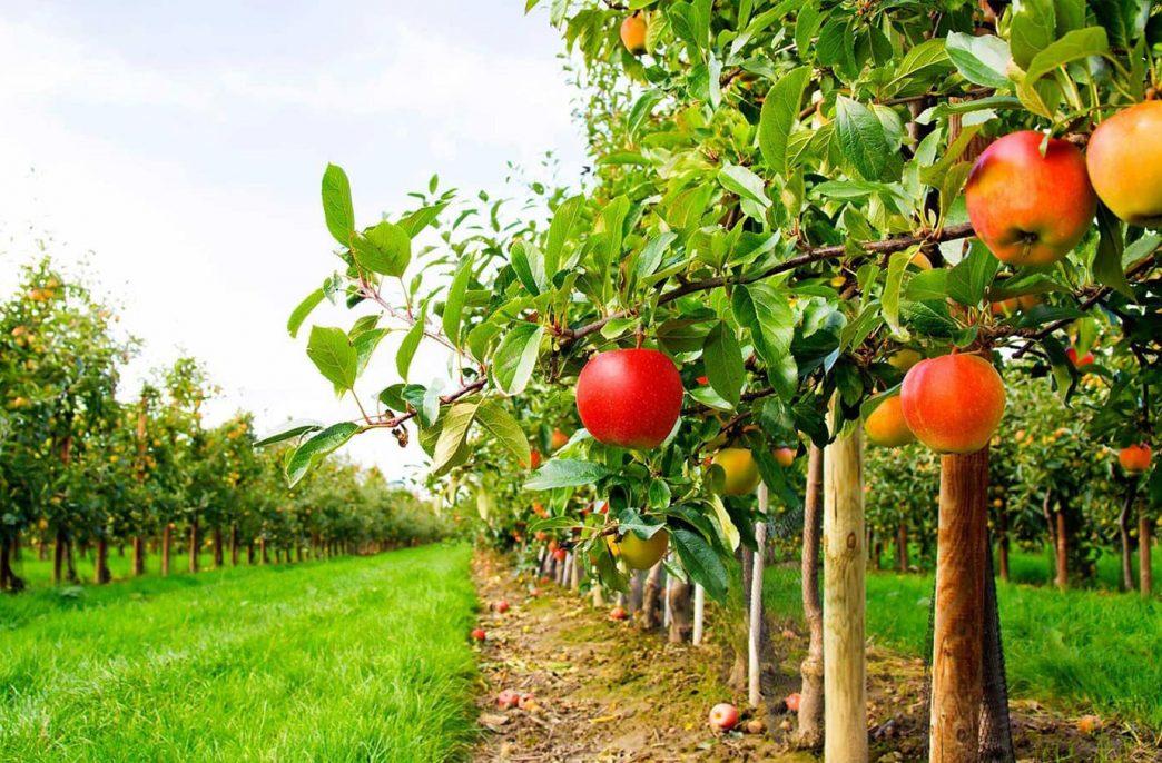 Промышленное садоводство ждет сильный рост